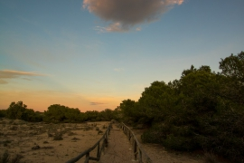 Продажа виллы в провинции Costa Blanca South, Испания: 4 спальни, 281 м2, № NC2050AS – фото 19