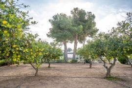 Продажа таунхаус в провинции Costa Blanca South, Испания: 2 спальни, 112 м2, № RV0181KP – фото 25